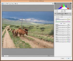How to Use Camera Raw Filters in Photoshop - Preset Kingdom