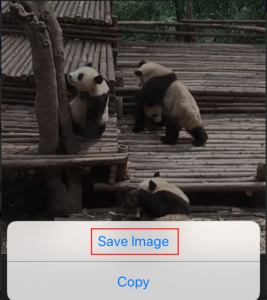 The Simplest Way] How to Directly Save GIF to iPhone Camera Roll