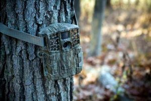 Best Trail Camera | Game Camera Reviews and Buyer's Guide for 2021