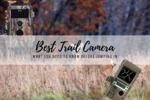 The Best Trail Cameras in 2021 – Reviews Storm