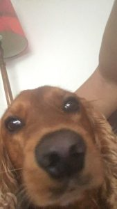 When you accidentally open the front camera