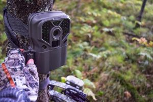 How Long Should You Wait To Check Your Trail Camera