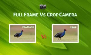 Full Frame Vs Crop Camera - Which one to Choose ? - PhotographyAxis