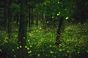 Guide to capturing firefly images - Tdub Photo