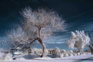 How to Shoot Infrared Photos
