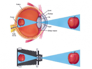 Optical focusing system of the human eye and a photographic camera,...    Download Scientific Diagram