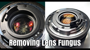 How to remove fungus from the inside of a camera lens - Alltop Viral