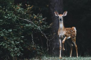 Best trail camera for documenting nature