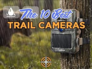 Top 10 Best Trail Camera 2021: Reviews & Buying Guide