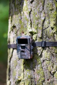 Why is My Trail Camera Not Taking Pictures? – Best Trail Camera Reviews