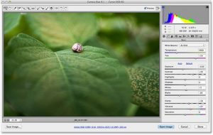 Camera Raw vs Photoshop – Which Should I Use?