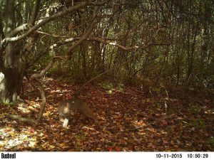 4 Best Trail Cams for Hunting & Photography (2021)   Heavy.com