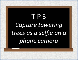 Use your phone camera's selfie mode to capture towering trees (click to  view) – Composing Cool Photos