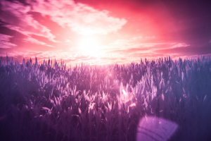 Infrared Photography 101 For Newbie Photographers - Taming Light Photography