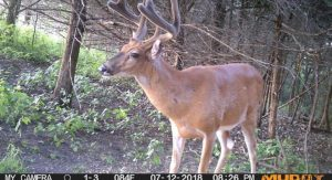 how long to leave a trail camera out Archives   Muddy Outdoors