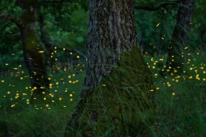 Incredible Photos of Fireflies and Tips on How to Make Your Own - The  Shutterstock Blog