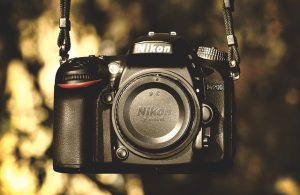 Which Nikon Camera Is Best For Bird Photography? Guide To Nikon Cameras For  Birds -