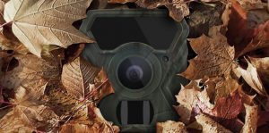 Why Is My Trail Camera Not Taking Pictures?