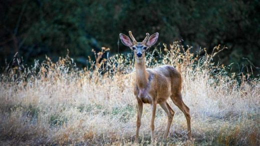 13 Best Trail Cameras for Wildlife Photography (Reviews / Comparisons)    Click Like This